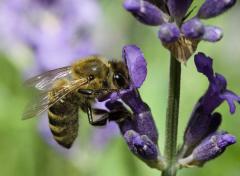 中蜂强群不分蜂经验(中蜂强群养殖技术)