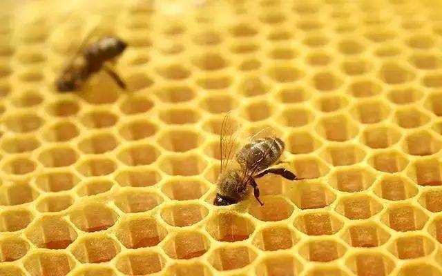 为什么蜜蜂的家是六角形(蜜蜂的蜂巢为什么是六边形的)