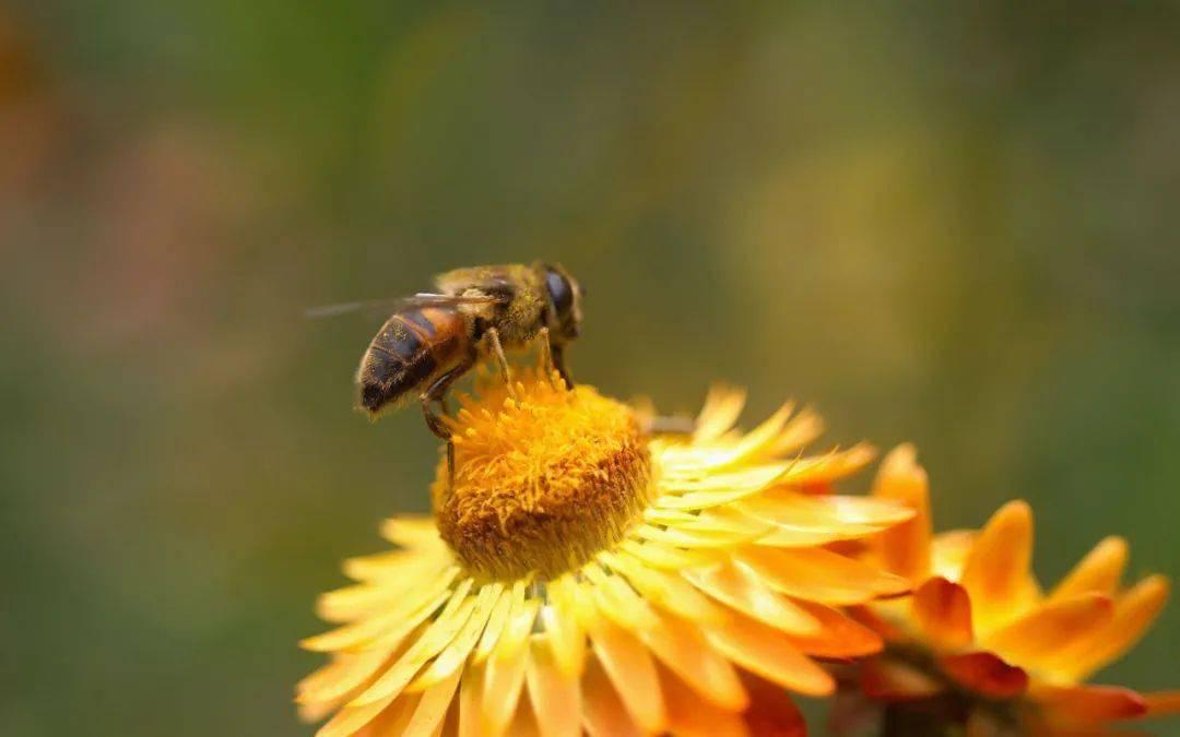 蜜蜂是凭什么找到自己的家(为什么蜜蜂可以找到自己的家)