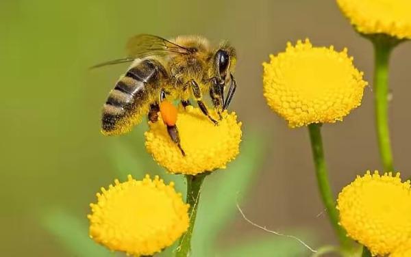 一箱蜜蜂一年能繁殖几次(一箱蜜蜂一个月能产多少蜜)