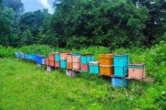 新手养蜂怎么选位置(怎样选择蜂场)