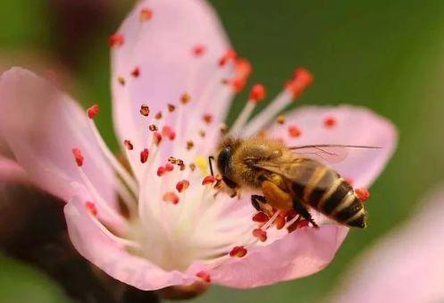 家庭养蜂技术新手入门(家庭养蜂需要什么条件)