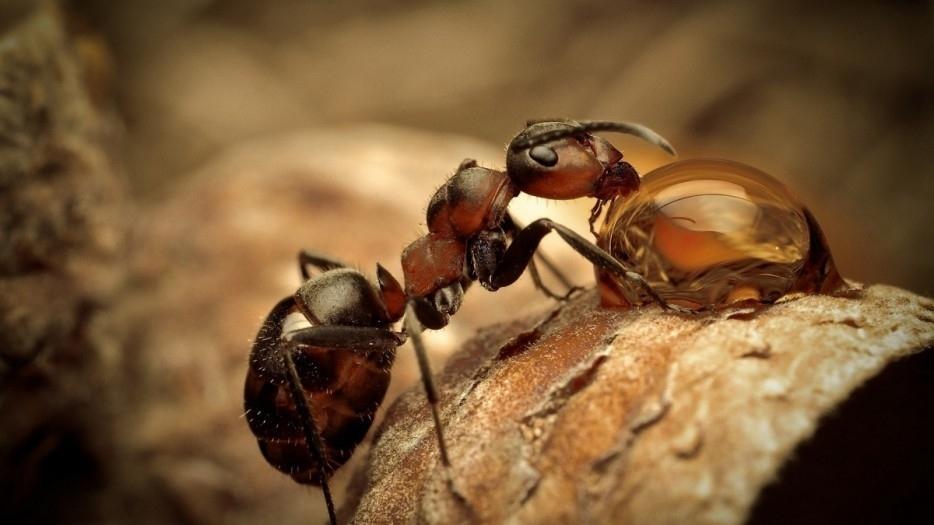 新手养蜂入门蜂箱有蚂蚁(蜜蜂箱有蚂蚁怎么防止)