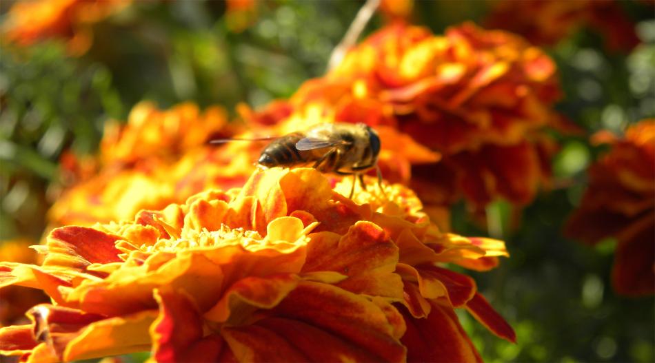 养蜂新手怎么起步(初次养蜂要注意什么)
