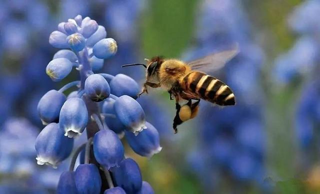 雄蜂出房多少天才试飞(蜜蜂出房几天试飞)