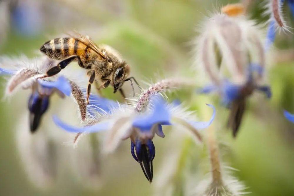 养50箱意大利蜜蜂能挣多少钱(养殖蜜蜂赚钱吗)