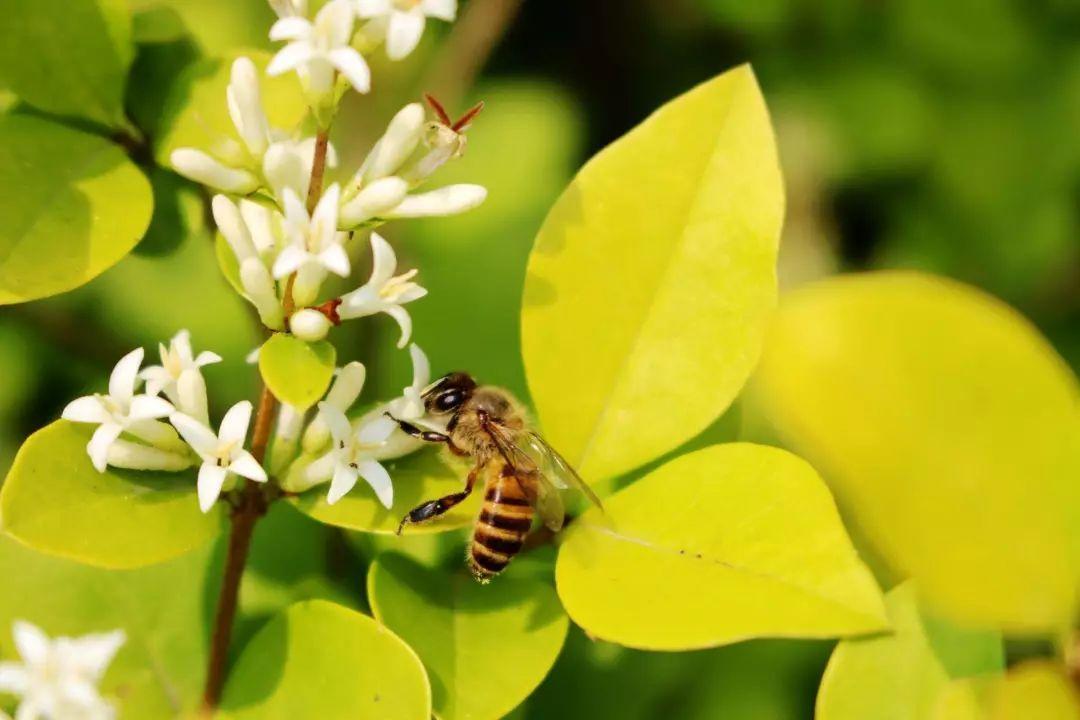 购买蜂群如何挑选(网上买的蜂群可以吗)