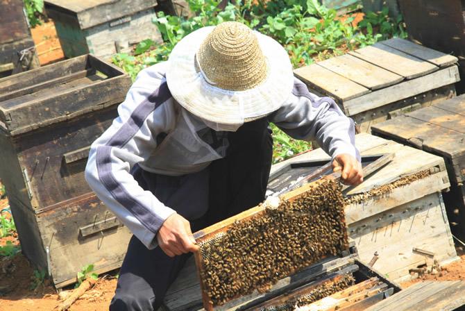 哒螨灵对蜜蜂有害吗(哒螨灵对蚜虫有效吗)