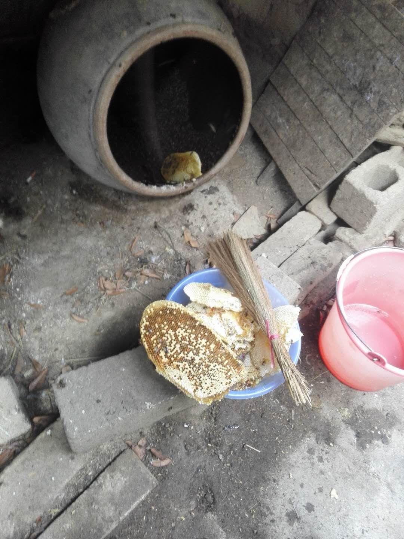 想养蜜蜂到哪里买蜂种(买蜜蜂养哪里才能买到)