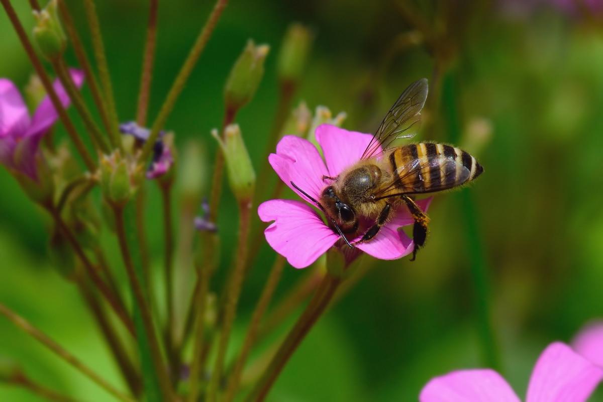 蜜蜂蜂螨怎么根治(治蜂螨不伤蜂的方法)