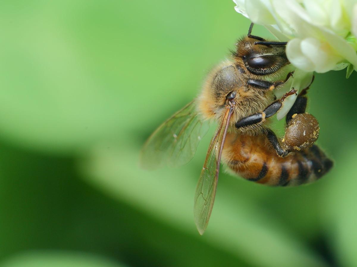 蜜蜂除螨用什么药效果最好(杀蜂螨什么药效果好)