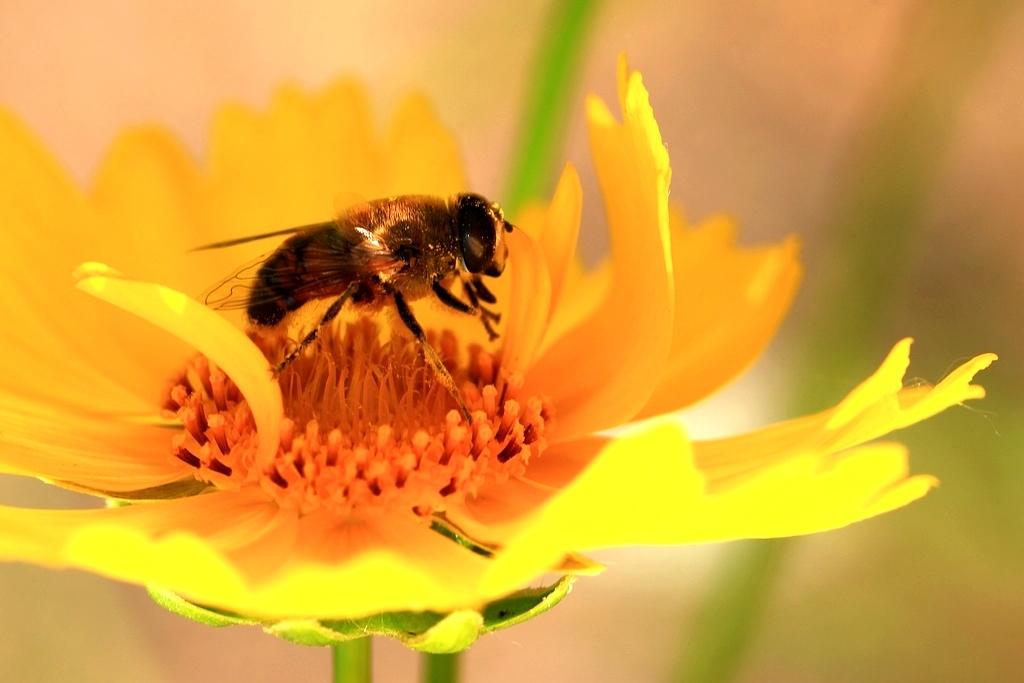 新手养蜂花粉怎么取(蜂花粉是怎么提取的)