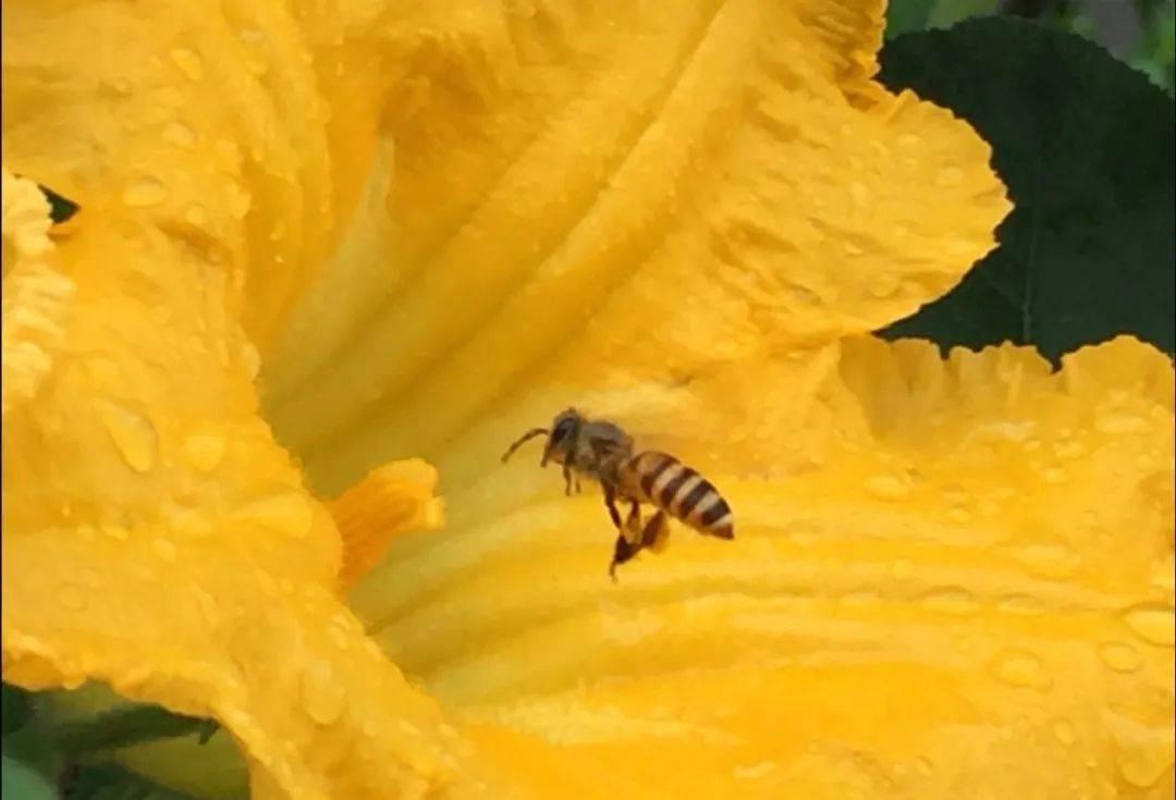 养蜂新手怎么管理(新手养蜂入门及注意事项)