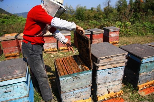 养蜜蜂投资大吗(养蜂赚钱不)
