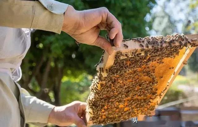 学养蜂技术培训在哪里(想学养蜂技术去哪里学)