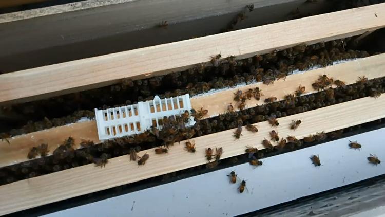 怎样能让工蜂停止产卵(如何制止工蜂产卵)