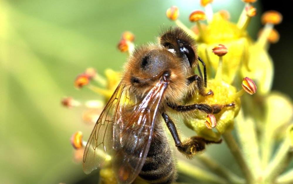 如何养好中蜂(养中蜂的详细技术方法)