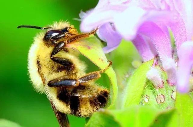 蜜蜂养殖利润有多大(蜜蜂养殖利润分析)