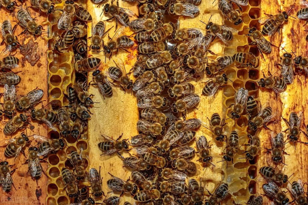 判断优质蜂王的标准(附带10种判断标准)