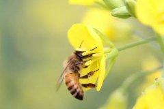 新手养蜂怎么样投食(养蜂人饲喂蜂群的小技巧)
