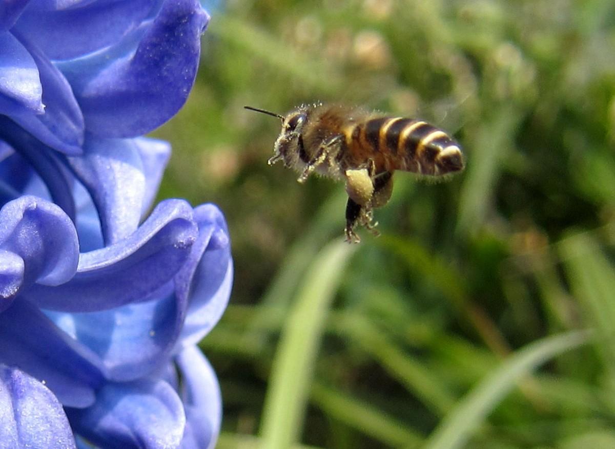 一箱蜂一冬天能喂多少糖(一箱蜜蜂过冬得多少斤白糖)