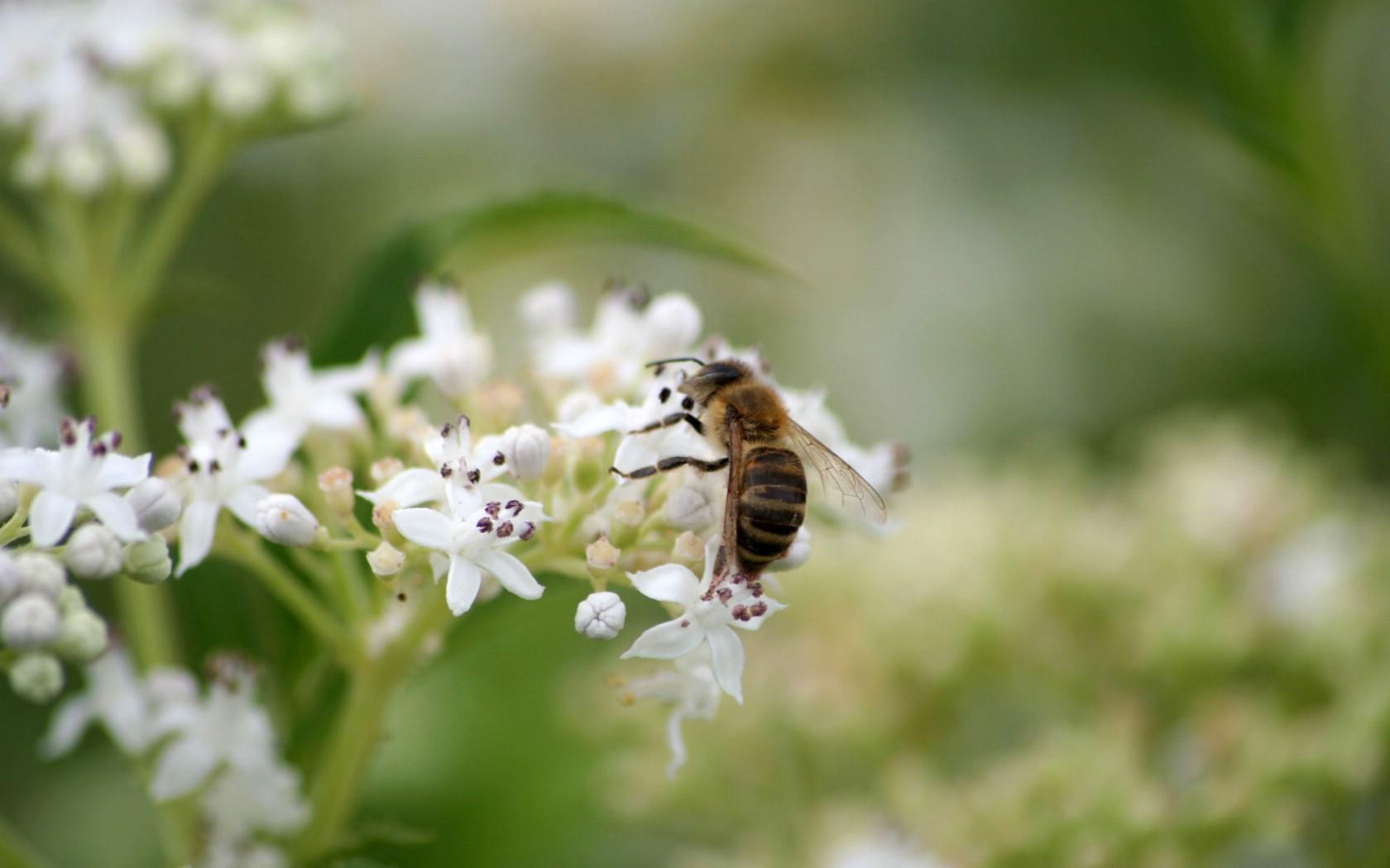 中蜂一斤蜂有几脾(一斤中蜂蜂量有多少脾)