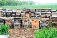 新手用哪种蜂箱养蜂好(养蜂用什么蜂箱好)