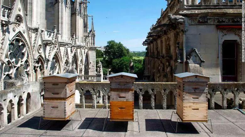 楼顶可以养蜂吗(家庭楼顶养蜜蜂会不会有什么影响)