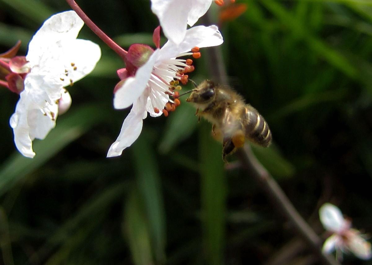 新手养蜂入门需要多少钱(养蜂需要投资多少钱)