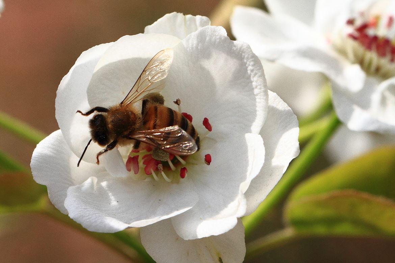 定地蜜蜂养殖入门知识(养殖蜜蜂的基本知识)