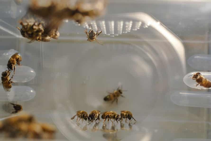 蜜蜂的越冬糖什么时候喂最好(蜜蜂越冬怎样喂白糖)