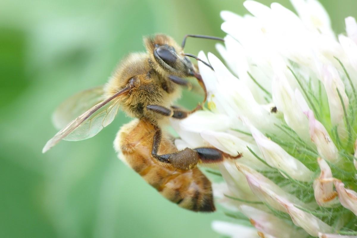 新手养蜂怎么保证蜂王不跑(养蜂人怎么控制蜂王)