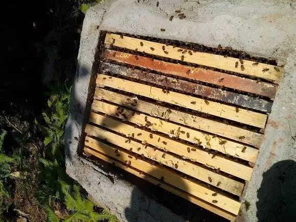 养蜂用圆木桶好还是用活框箱好(蜜蜂土养好还是活框好)