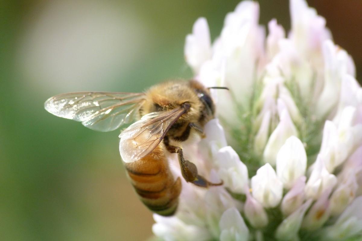 工蜂寿命从何时开始算起(工蜂能活多长时间)