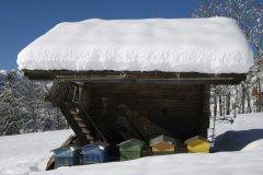 蜂群室内越冬管理技术(养蜂过冬技术)