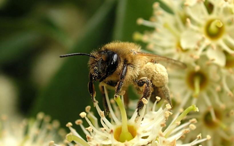 养蜂一箱一年赚多少钱(养蜂投资多少钱)