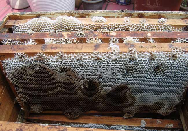 蜜蜂巢脾间距是多少(巢脾间距多大合适)