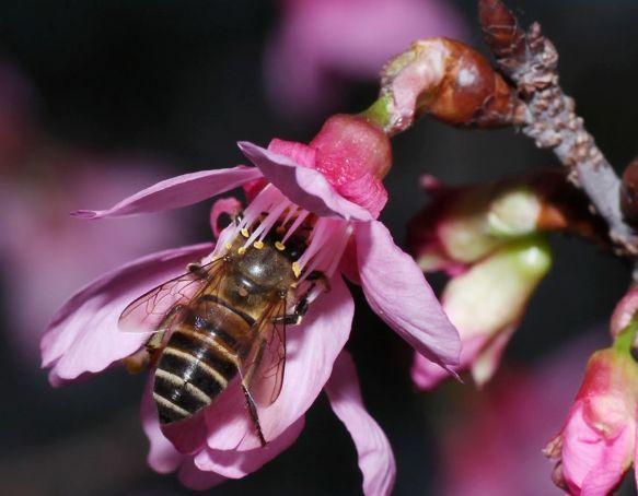 小蜂螨的危害及防治方法(蜂螨怎么治疗和预防)