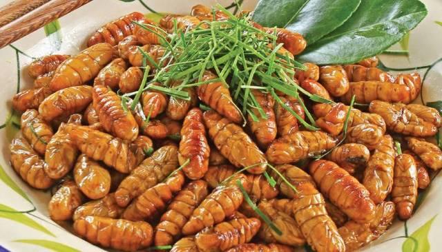 蜂蛹和蚕蛹有什么区别(蜂蛹和蚕蛹的营养价值一样吗)