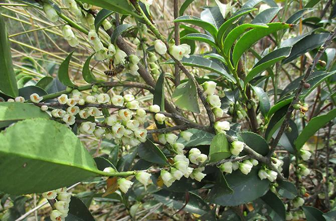 中国三大蜜源植物指的是哪三种(常见的蜜源植物有哪些)