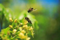 养蜂初学者该怎么做(新手养蜂怎么做)