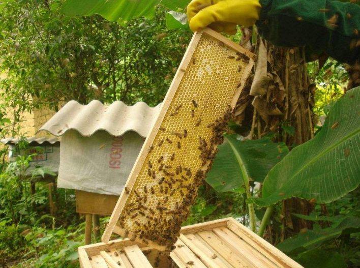 蜜蜂一年繁殖几次(蜜蜂繁殖周期)