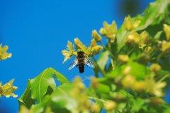 只有几十只蜜蜂能不能繁殖起来(30只蜜蜂1只蜂王能繁殖吗)