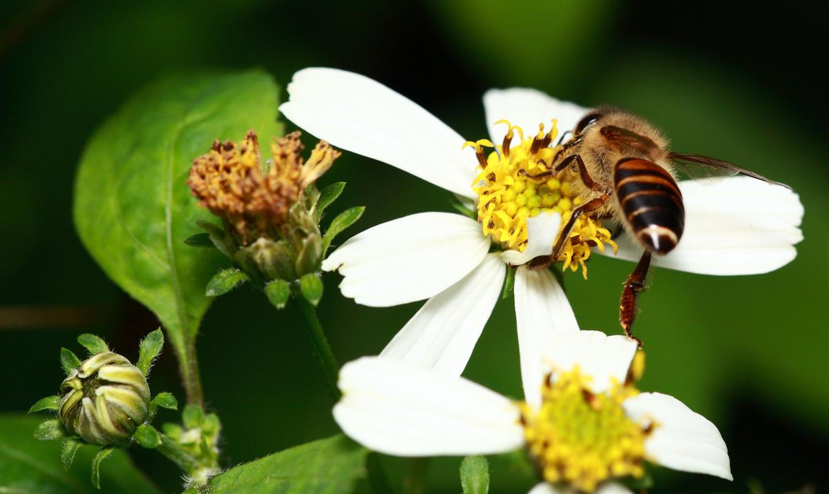 冬天蜜蜂会繁殖吗(蜜蜂冬天产蜂蜜吗)