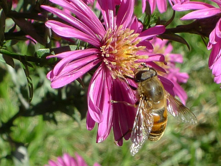 一个蜂箱有多少只蜜蜂(蜜蜂有几万只)