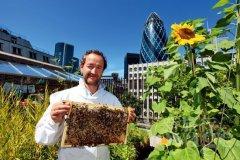 城市养蜂归哪个部门管(养蜂属于畜牧业吗)