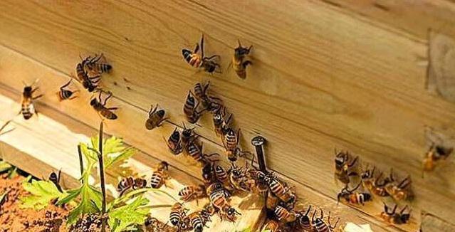 蜂路一般要多宽(蜜蜂蜂路标准距离)