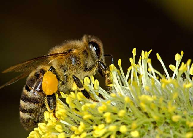 冬季蜜蜂什么时候治螨(越冬蜂治螨要注意什么)
