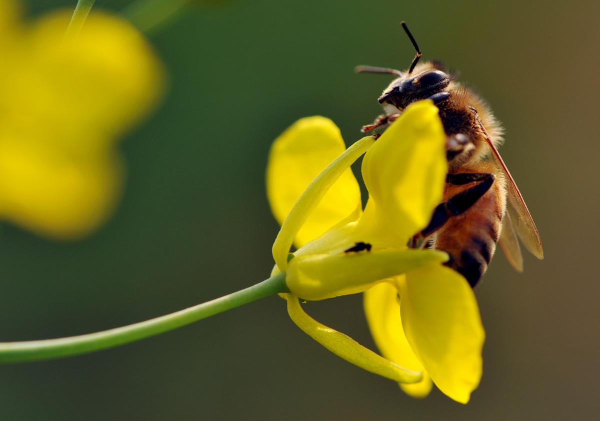 养蜜蜂的法律法规(养蜂管理办法处理的的法律法规)