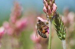 家庭养蜂需要什么条件(家庭养蜂技术新手入门)